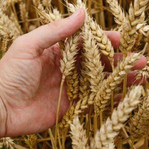 Corsi con crediti formativi per Agronomi e Forestali
